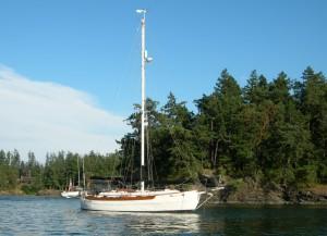 kelpie_at_double_island